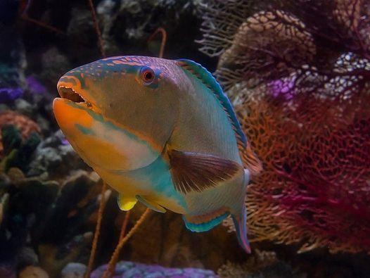 Aquarium Adventures at Home: Animals After Dark, 30 January | Online Event | AllEvents.in