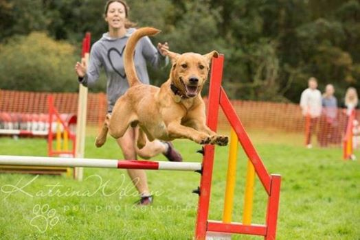 Come and Try Agility Workshop