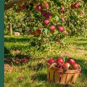 rvores de Fruto em Jardins