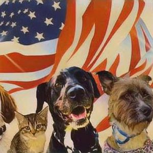 Mechanicsville VA - Petsmart Adoption Event