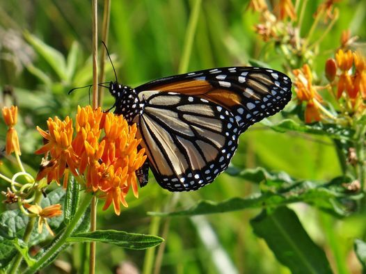 Garden Planting Tips and Tricks for Spring Pollinators, 15 May   Online Event   AllEvents.in