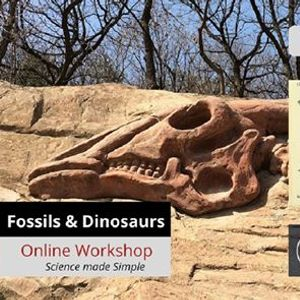 YS Fossils and Dinosaurs