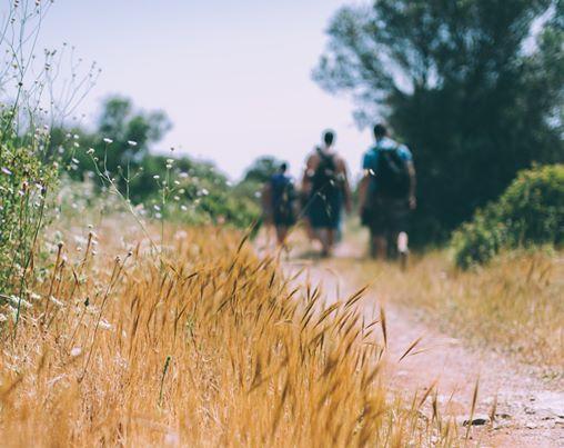 Wandeling - Beringen