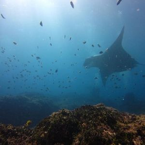 Double Dive North Stradbroke Island 19th December 2020