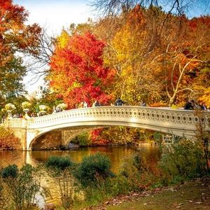 Central Park Social Walk