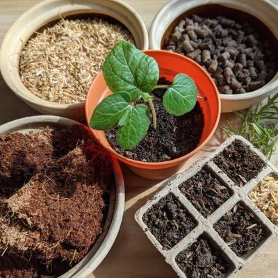Art of Planting starts  Nov 13 (4 sessions)
