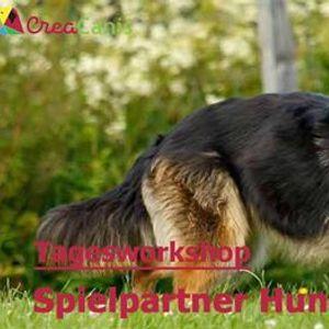 Spielpartner Hund Vanessa Brugger D-Essen