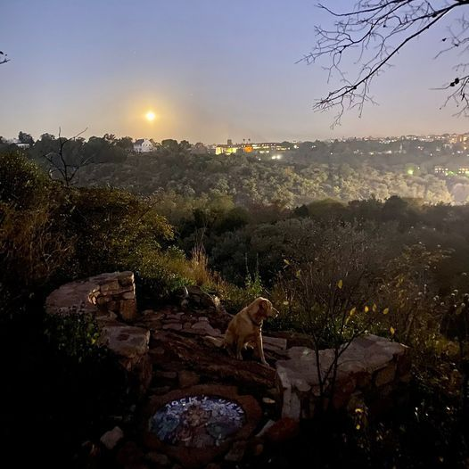 Full Moon Walk at The Wilds, 24 June | Event in Johannesburg | AllEvents.in