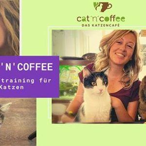 ClicknCoffee - Clickertraining im Katzencaf
