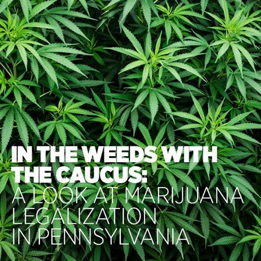 In the Weeds With The Caucus