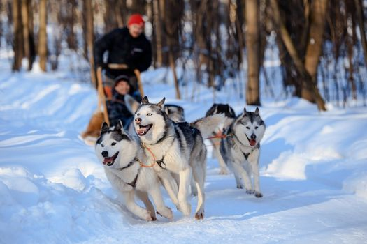 Whoa! Let's go Dogsledding!, 30 January | Event in Duluth | AllEvents.in