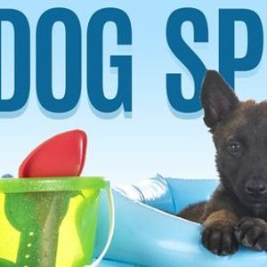 10th Annual Dog Splash