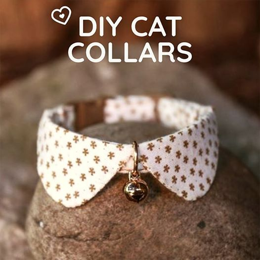 Diy Cat Collars At Kittens In Cups Annapolis