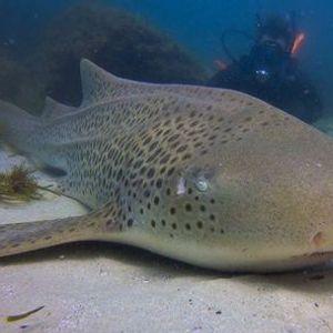 Double Dive North Stradbroke Island 29th November 2020