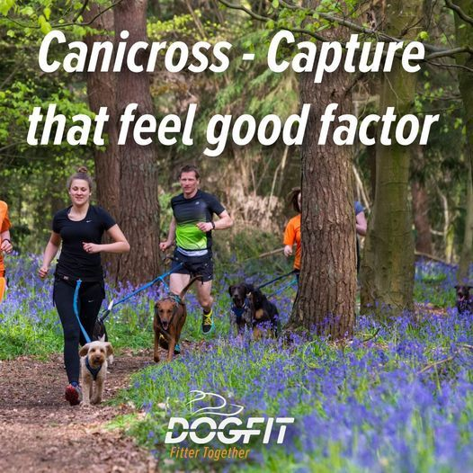 Canicross/cani-hike kickstarts (1-2-1 tasters), 5 June | Event in Huddersfield | AllEvents.in