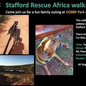 Stafford Rescue Africa walk