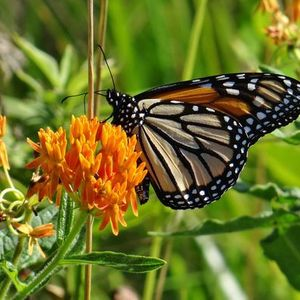 Garden Planting Tips and Tricks for Spring Pollinators