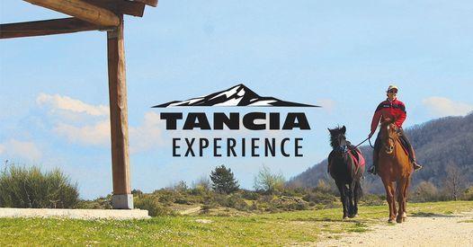 Passeggiata a cavallo al Tancia