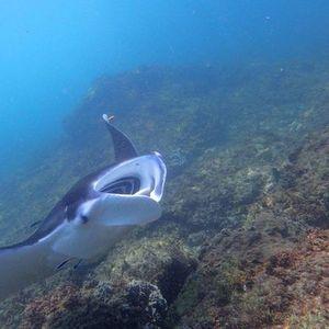Double Dive North Stradbroke Island 6th December 2020