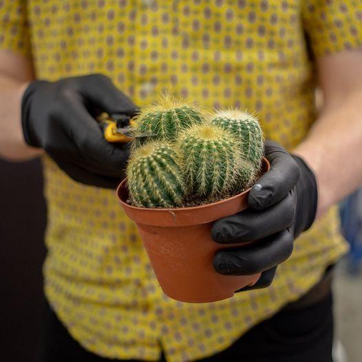 Workshop: Cut/Paste Cacti, 12 June | Event in Amsterdam | AllEvents.in