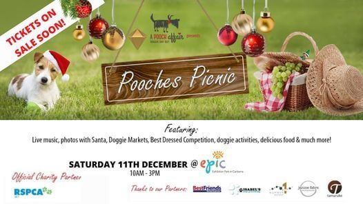 A Pooch Affair - POOCHES PICNIC, 11 December   Event in Canberra   AllEvents.in