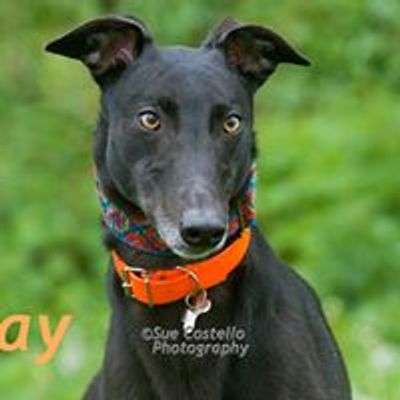 Makants Greyhound Rescue NW