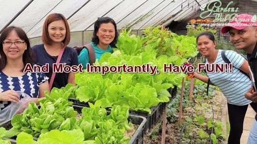 Grow Organic Vegetable Using Soil & Soil-Less Method