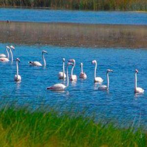 Por belas lagoas e dunas de Santo Andr e Melides