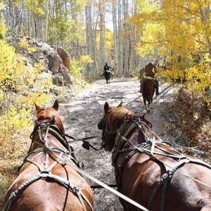 Fundamentals Of Driving Horses