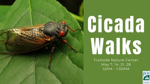 Cicada Walks, 7 May | Event in Cincinnati | AllEvents.in