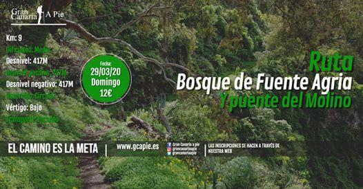 Bosque de Fuente Agria y Puente del Molino