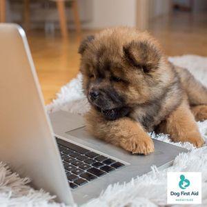 Dog First Aid Course (Interactive Virtual Course)