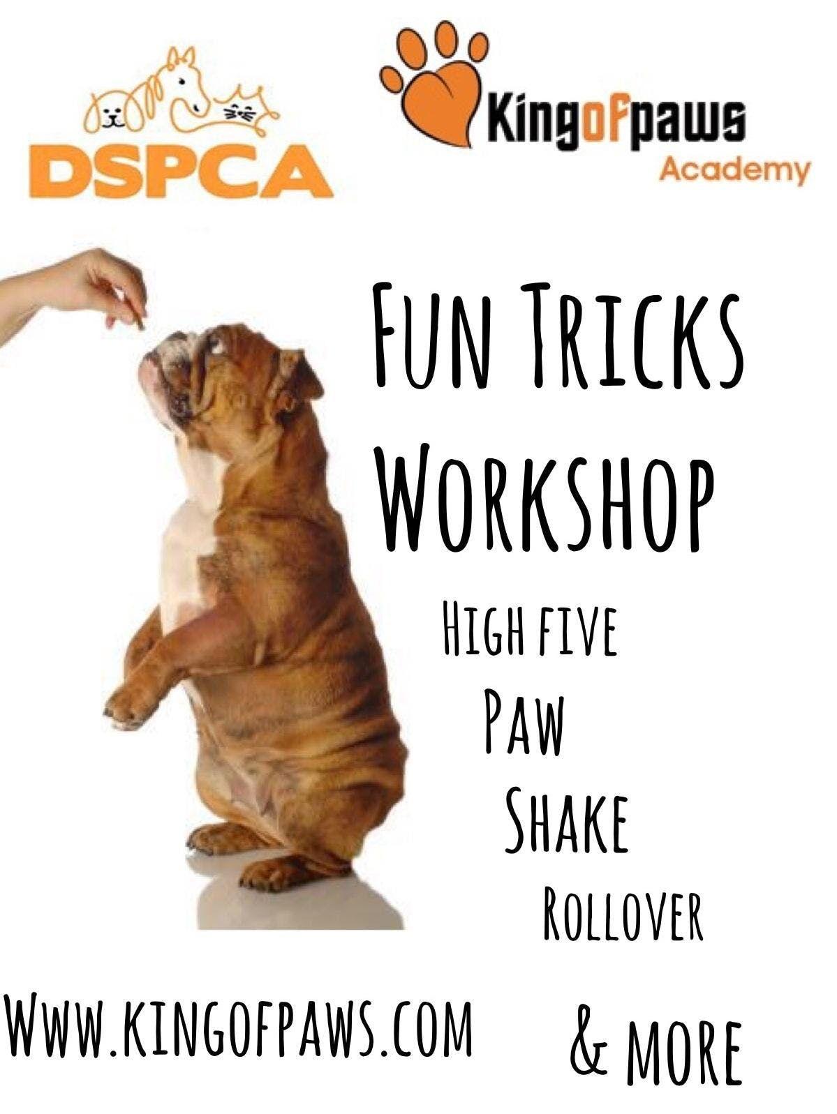 Fun Tricks Workshop  The DSPCA