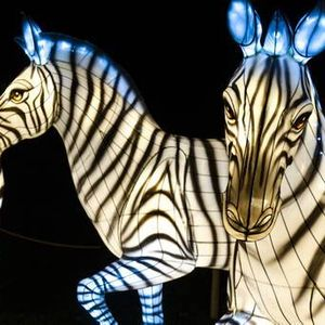 Cyber Monday Deal - Bronx Zoo Holiday Lights