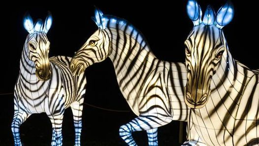 Cyber Monday Deal - Bronx Zoo Holiday Lights, 5 January | Event in New York | AllEvents.in