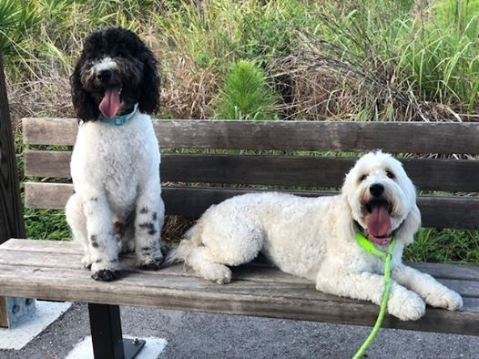 Akc Canine Good Citizen Evaluation At Sit Means Sit Of Swfl