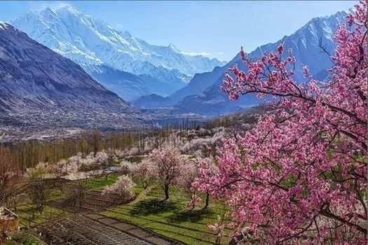 Cherry Blossom Valleys | Hunza Valley, Northern Pakistan | Event in Dubai | AllEvents.in