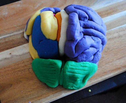 Building Brains; An introduction to Neuro-anatomy, 31 July | Event in Centurion | AllEvents.in