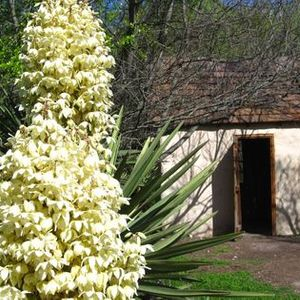 Guided Ethnobotany of Native Plants Walking Workshop