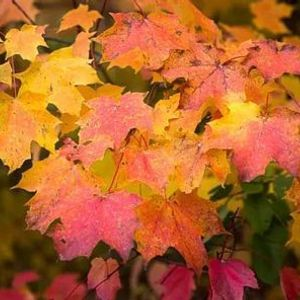 Kamview Fall Colours Tour