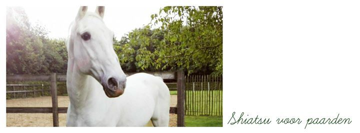 Initiatie shiatsu voor paarden