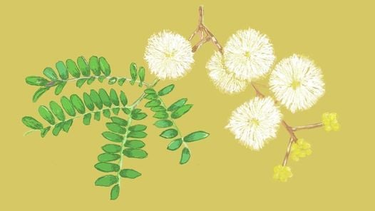 Children's Week Drawing on Nature: Wattle We Draw?, 25 October | Online Event | AllEvents.in