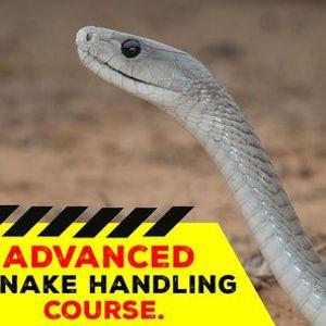 Advanced Snake Handling