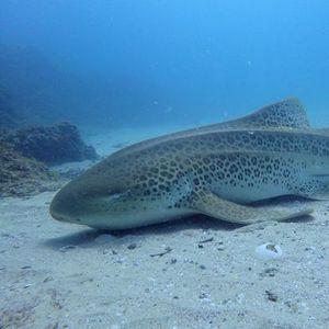Triple Dive  Advanced - North Stradbroke Island - 12th December