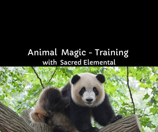 Animal MAGIC (1-Day) - Training