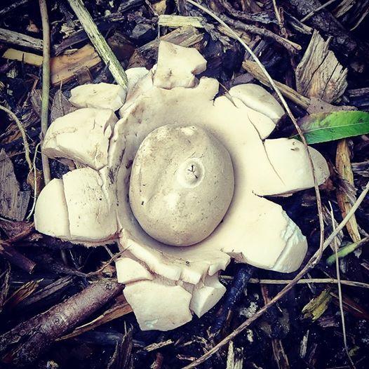 Magnifying Mushrooms drawing workshop