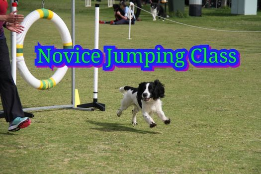 Novice Jumping - Sequences & Full Course, 18 January | Event in Forrestdale | AllEvents.in