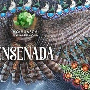 Ayahuasca y Bufo Alvarius en Ensenada B.C.