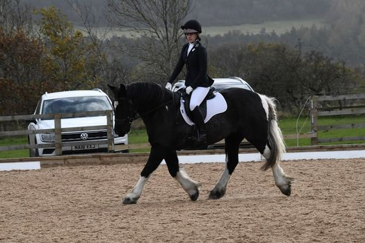 Dressage Competition, 7 March | Event in Durham | AllEvents.in