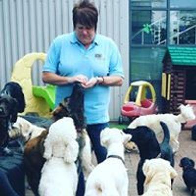 Ipswich Dog Daycare Creche